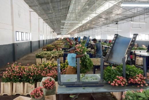 About our sustainable rose nursery | Herburg Roses